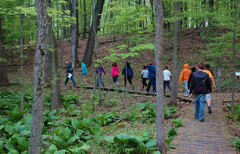 woods walk 2